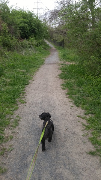 Truffles on the Washington and Old Dominion Trail Pet Friendly Walking Trail