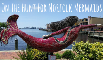 On The Hunt For Norfolk Mermaids
