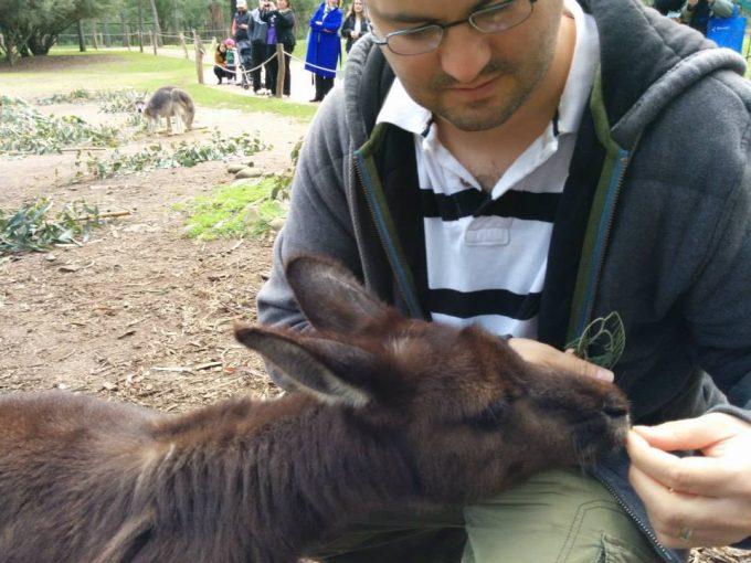 Stephen feeding a kangaroo