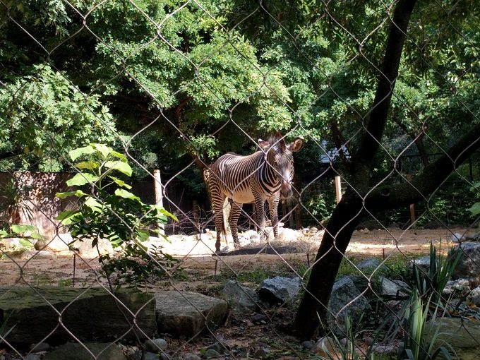 2 - Z is for both zoo and zebra