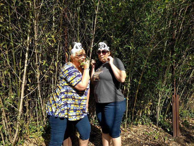 8 - The pandas in their natural habitat eating bamboo shoots