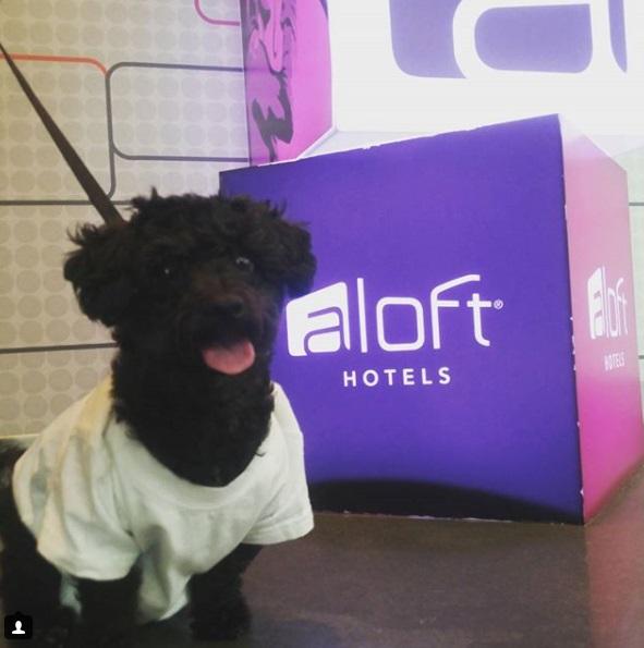 Truffles at Aloft Raleigh