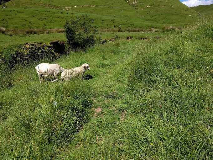 4 - Try to find the lesser-spotted eight-legged sheep