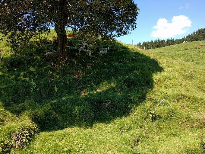 6 - Enjoy the sheep chillaxing in the shade