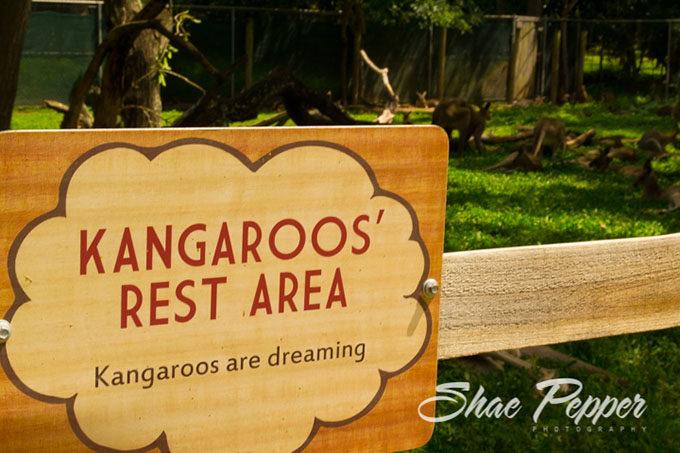 Kangaroos' Rest Area at Lone Pine Koala Sanctuary