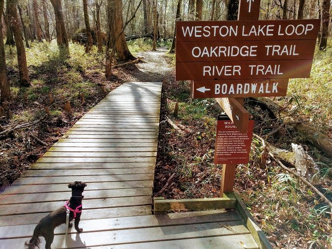 Going for a hike at Congaree National Park