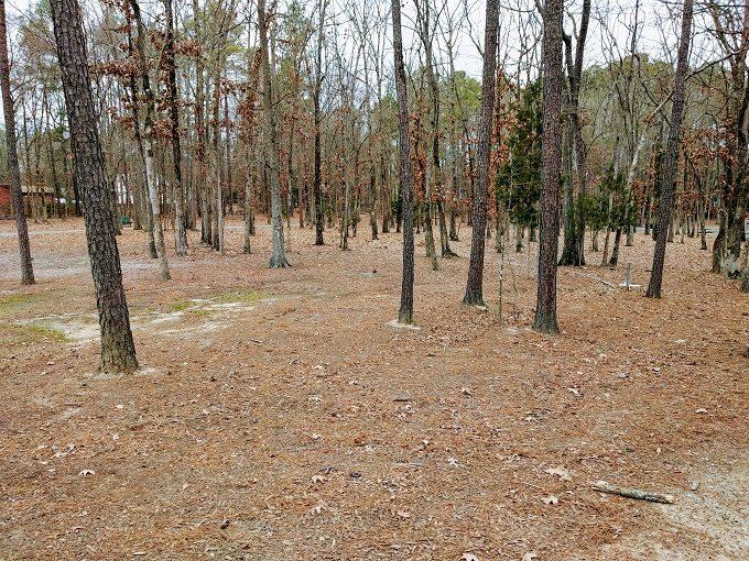 Irmo Community Park trees