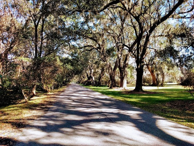 Oak driveway leading up to Magnolia Plantation & Gardens