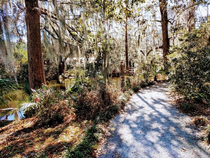 So much Spanish moss over the trees