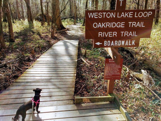 Start of the Weston Lake Loop at Congaree National Park