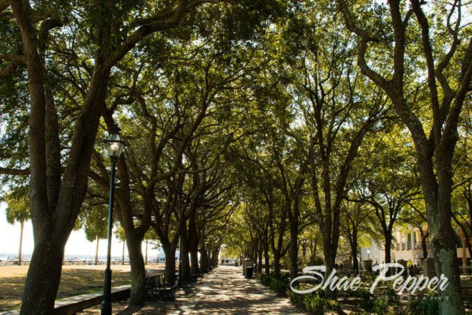 Tree lined sidewalk in Charleston SC