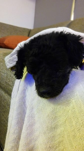 Truffles sleeping again