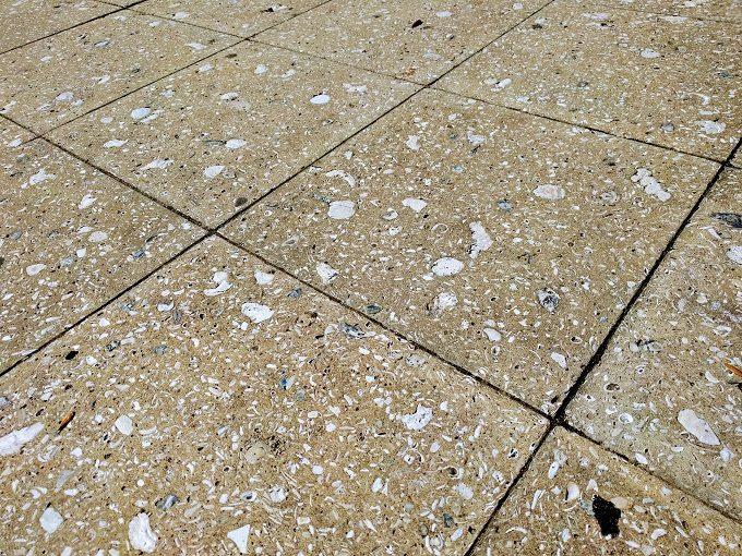 Shells in the walkway in Beaufort SC