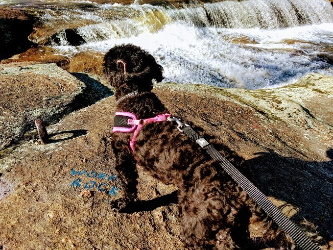 Truffles enjoying the falls