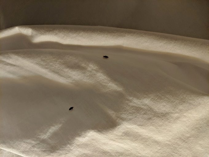 Bed bugs at Fairfield Inn Charlottesville North, Virginia