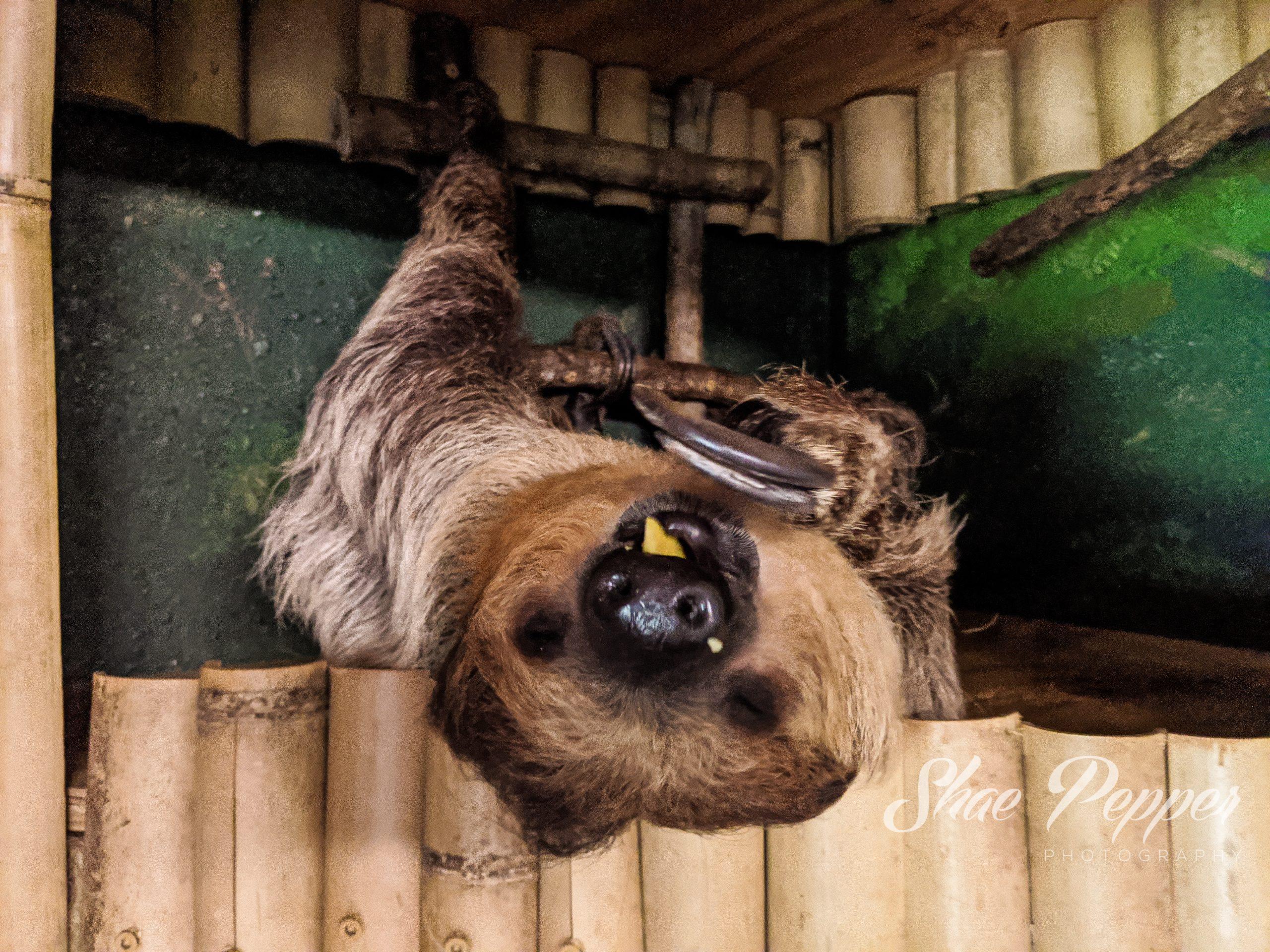 Animal Experience Otter Swim Barn Hill Preserve Louisiana ...